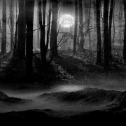 A scary looking forrest on a moonlit night.