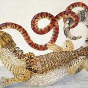 Illustration of an alligator biting a snake