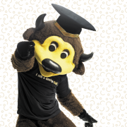 Chip the Buffalo in a grad cap