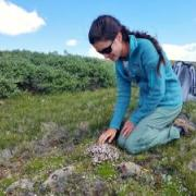 ENVS Student Gracie examining alpine plants.
