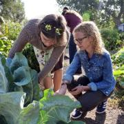 Jill Litt, an environmental studies professor, works at her urban garden prior to the COVID-19 pandemic.