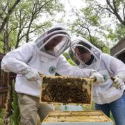 students observing honeybees