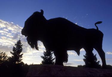 buffaloshade