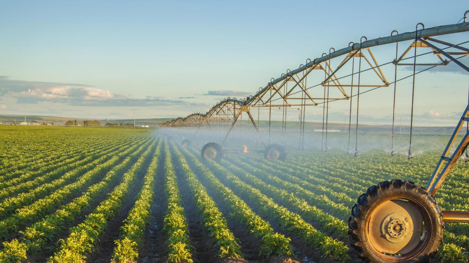 Pivot irrigation system.