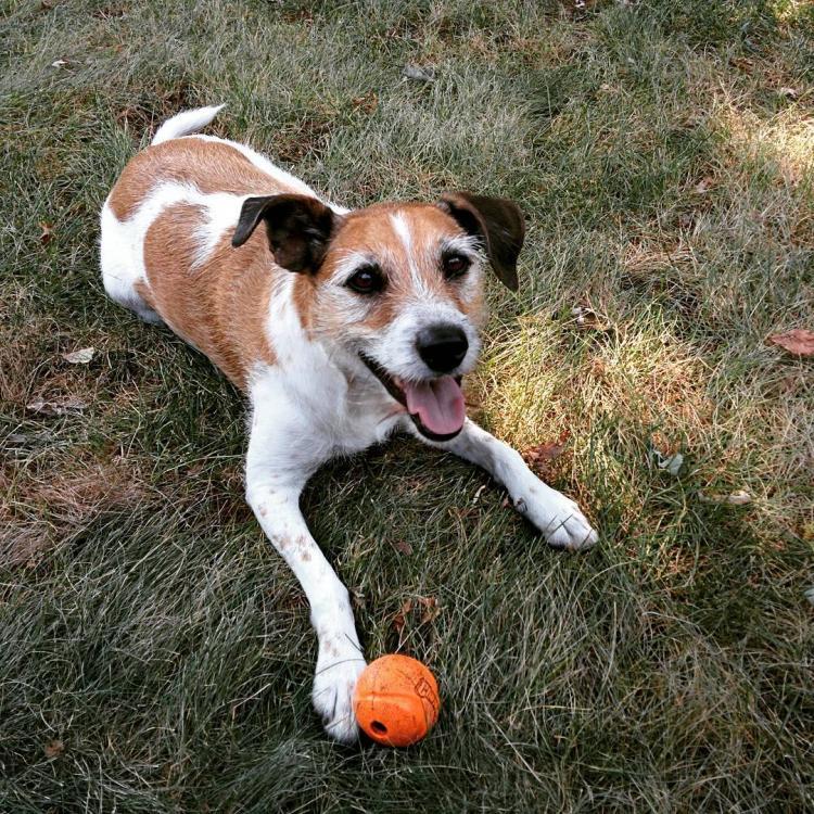 Holly, my pet dog