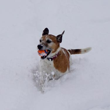 Holly running through the snow