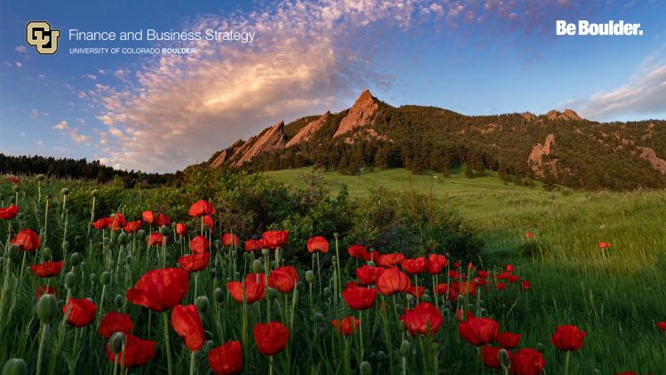 Poppies on CU Boulder campus grounds