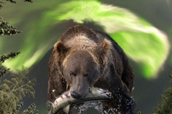 Bears and Aurora of Alaska