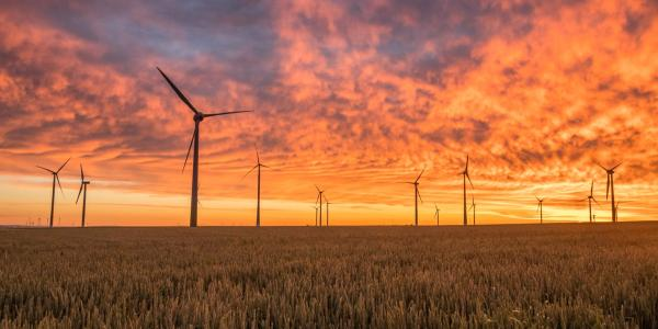 Photo of wind turbines in a field during sunset