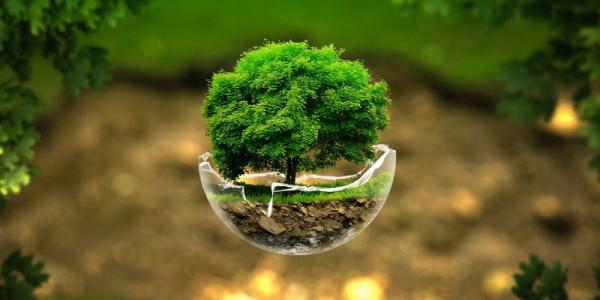 Graphic of tree in glass globe