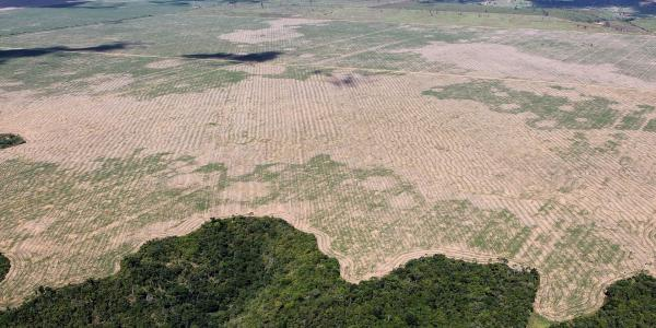 Aerial photo of a field and deforestation in Brazil