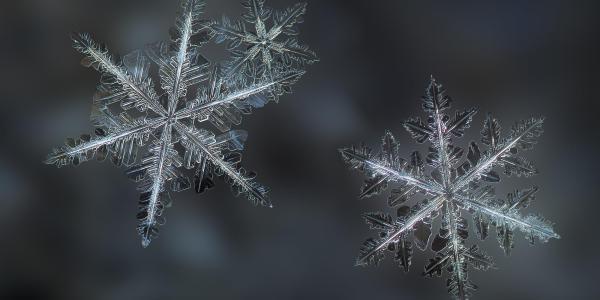 Picture of three snowflakes through a macro lens