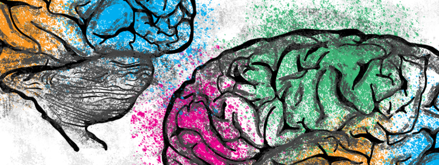 Drawing of a human brain