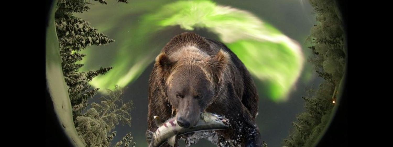 Photo of a bear and aurora overhead.