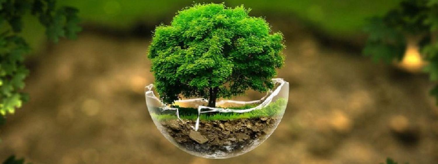 Graphic of a green tree in a glass globe