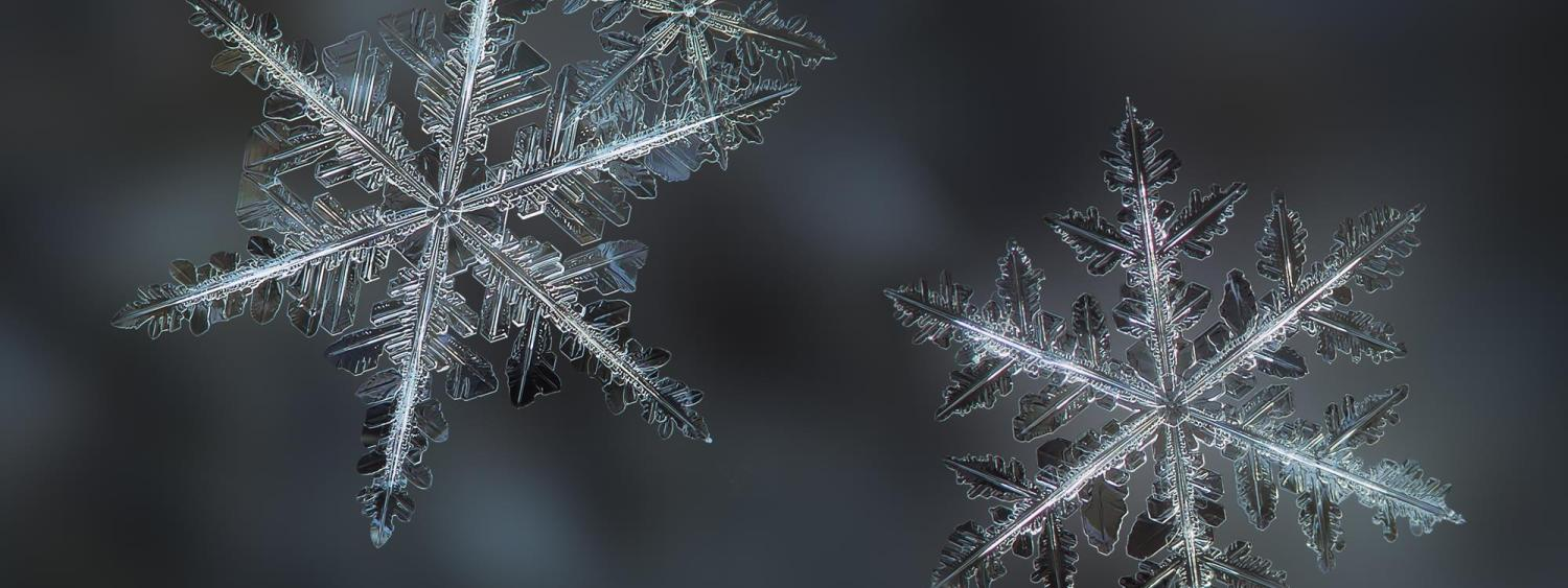 A picture of three snowflakes through a macro lens