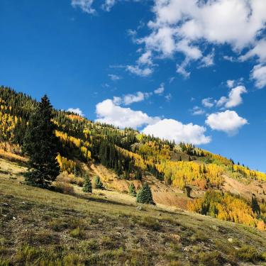 Photo of the fall colors aspen and evergreen trees in the mountains