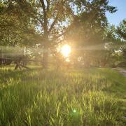 Photo of sunshine coming through cottonwood trees