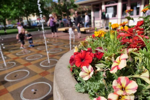 Flowers near Pearl Street fountain in Boulder