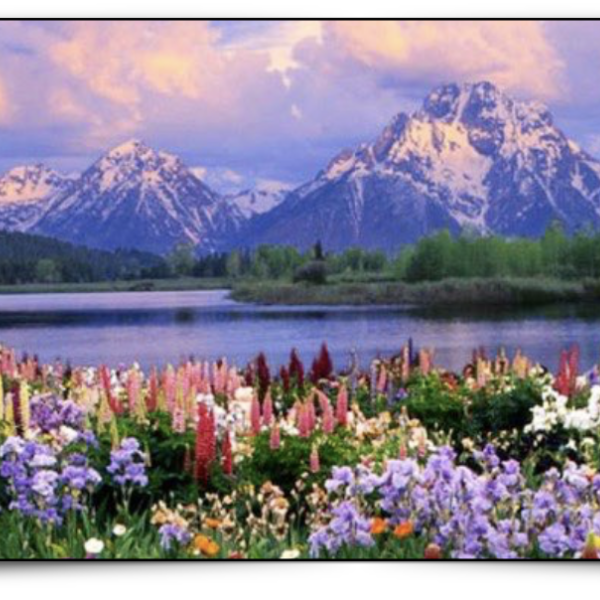 Mountain landscape with lake and foreground flowers