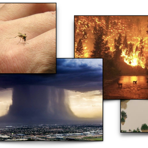 Photocollage of mosquito biting hand, a super storm, wildfire, and a flooded housing development
