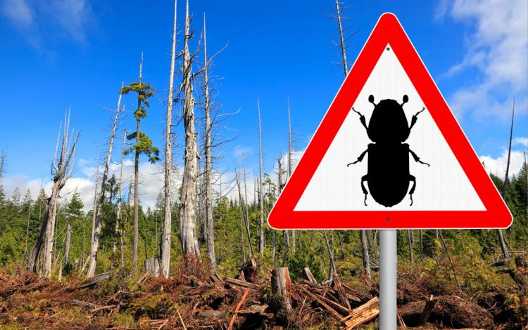 Triangular sign with silhouette of beetle. Dead tree in the background.