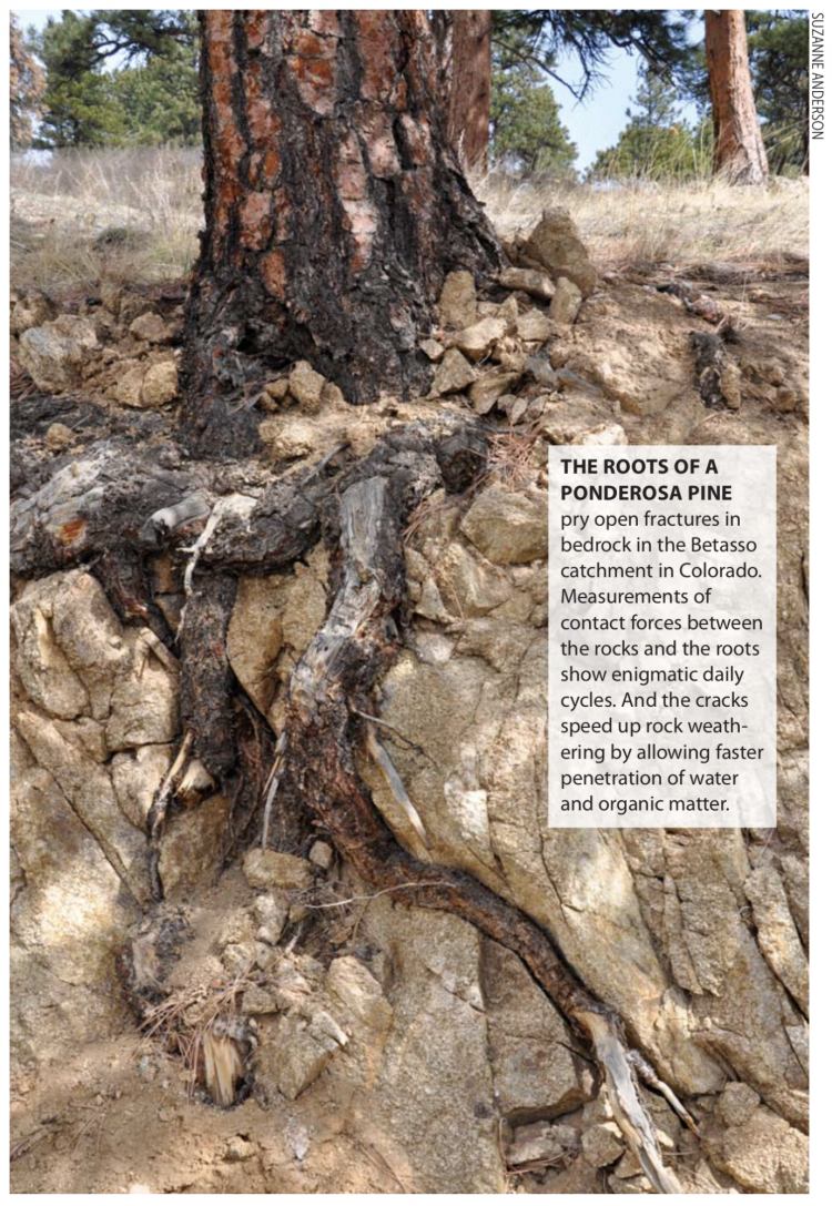 A base of a tree with roots exposed over rock
