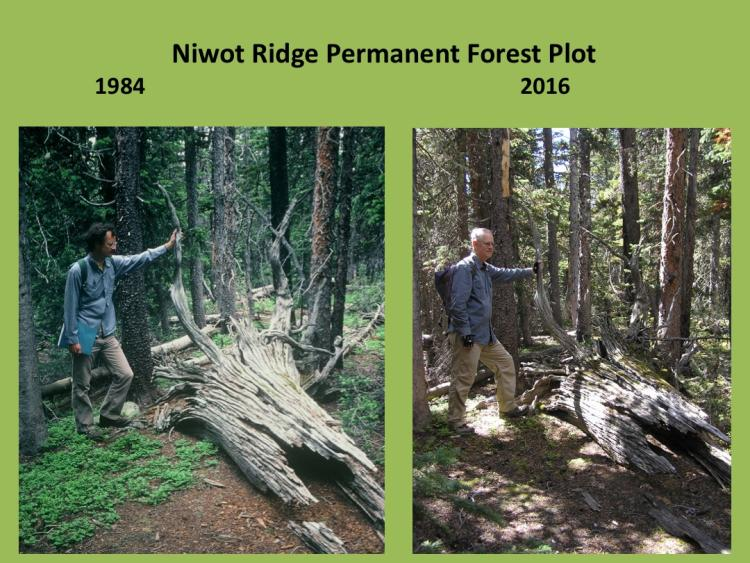 man standing in next to rotting, downed tree in 1984 and 2016