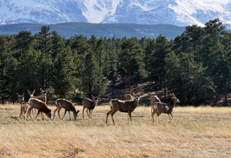 Deer graze in a meadow with a mountain backdrop