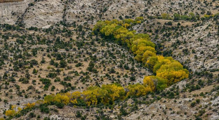 Aerial photo of arid landscape with tree along a creek