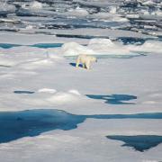 Polar bear on ice in the Arctic