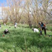 people digging or planting in a grassy field