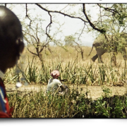 Elephants passing by African field with African onlookers