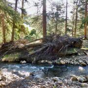 Tree debris on creek bank.