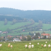 photo of Czech country landscape