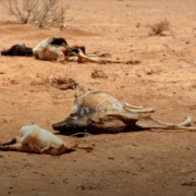 Dead animals in dry, desert-like terrain