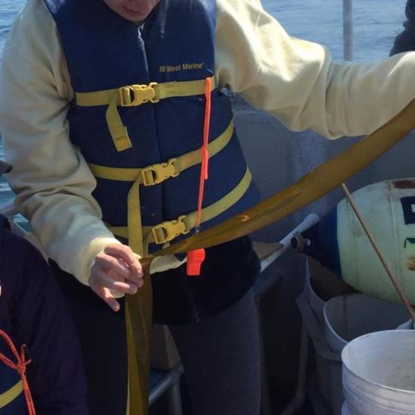 Investigating bull kelp in Parks Bay, Washington