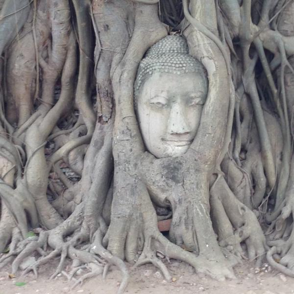Stone head of Buddha engulfed in the roots of a tree