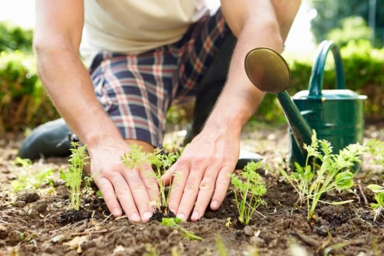 A person kneels in the dirt and tends to a small plant
