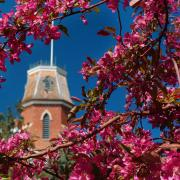 Old_Main_Blossoms1