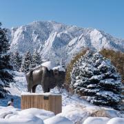 Photo CU Boulder campus Rallphie snow