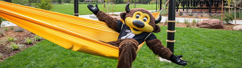 cu boulder mascot chip posing on a hammock