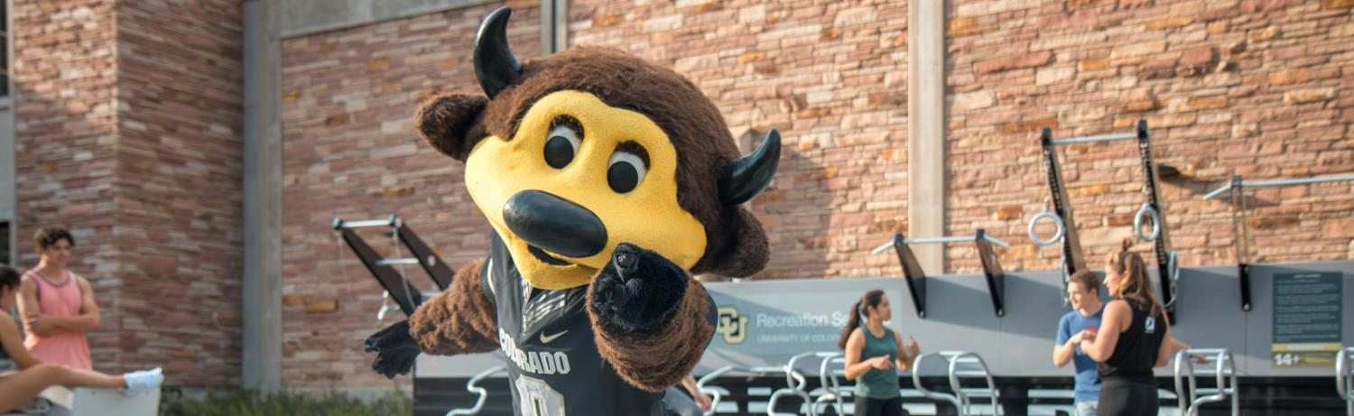 Photo of Chip the Buffalo posing with his arms stretched out in front of the Outdoor Fitness Court at the Main Student Rec Center.