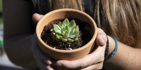 Student holding potted succulent.
