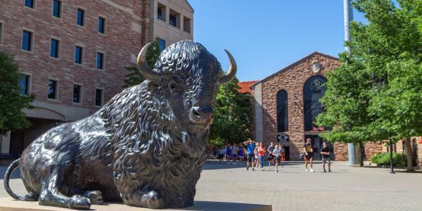 Buffalo statue at Folsom Field