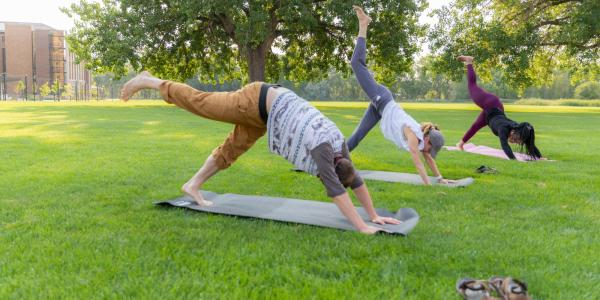 Three students do a downward facing dog yoga pose on mats in the lawn on a sunny morning.