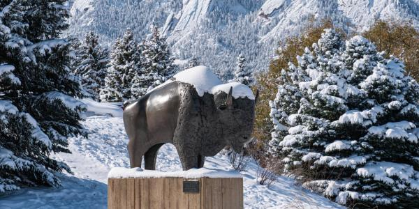 Sculpture of Ralphie, the buffalo, in the snow