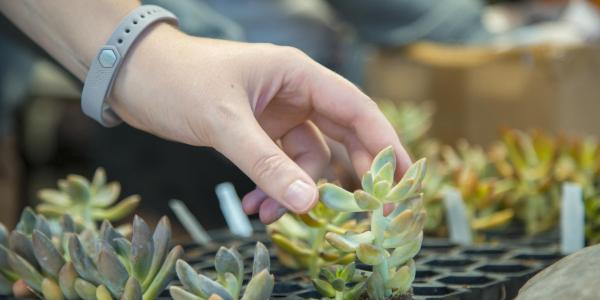 a student reaching for a succulent