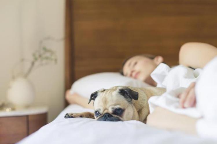 person sleeping with a pug next to them