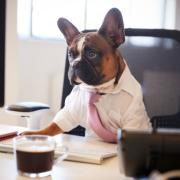 dog dressed in business attire